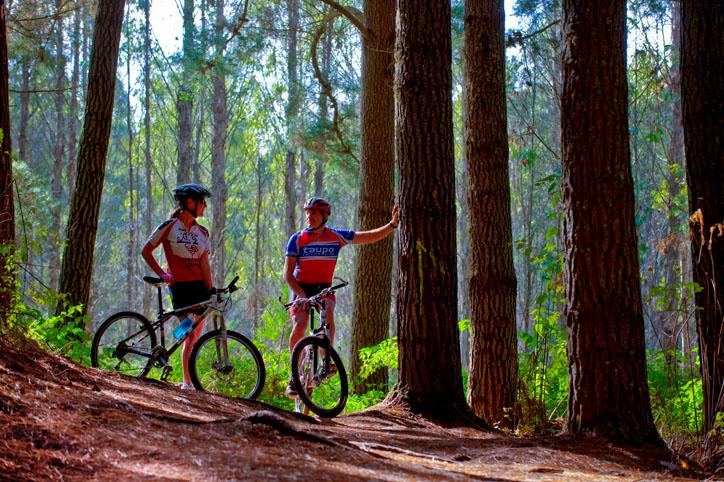 Mountain biking amongst The Redwoods