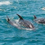 See Dolphins in The Bay of Islands